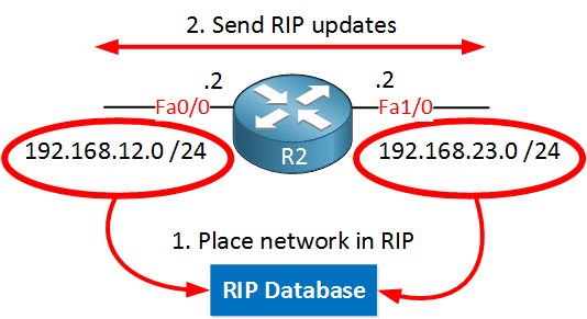 rip-advertise-two-networks